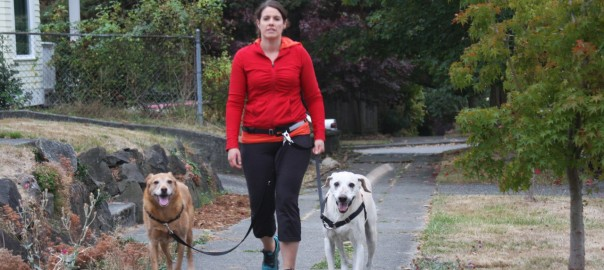 woman walking dogs on a leash