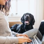 buy a zoom session with Service Dog Mentors